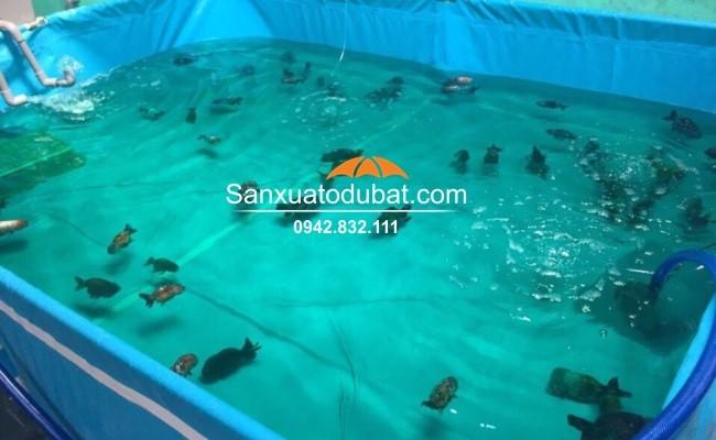 Bồn bạt nuôi cá Koi